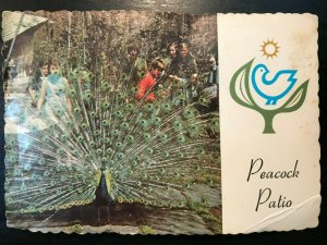 Vintage Postcard>1960-1973>Sterling Forest Gardens>Peacock Patio>Tuxedo>NY
