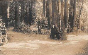LPS47 La Honda California Woods Scene Postcard RPPC