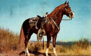 Beautiful Horse Hoss 1967
