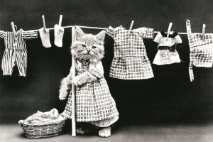 Cat Kitten hanging laundry FUNNY PETS Real Photo Russian Modern postcard