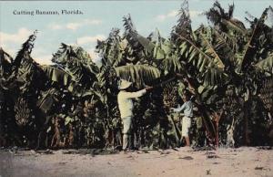 Florida Cutting Bananas