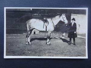 LADY WITH WHITE & BLACK SPECKLED HORSE early RP Postcard