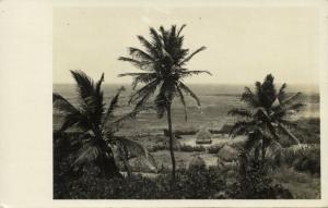 curacao, N.W.I., Landscape View, Palm Trees (1930s) Sunny Isle RPPC