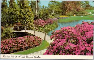Blossom time at Florida's Cypress Gardens