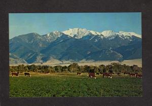 MT Man Mountain Jefferson River Cattle Whitehall Twin Bridges Montana Postcard
