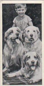 Carreras Cigarette Card Dogs &  Friends No 24 Clumber Spaniel