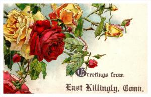 Connecticut  East Killingly , Greetings , Roses