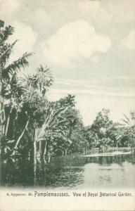 mauritius, PAMPLEMOUSSES, Royal Botanical Gardens 1910s
