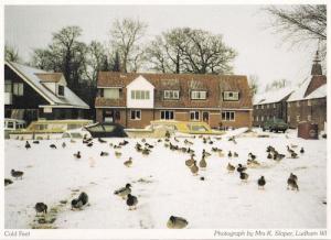 Ludham Norfolk Ducks In Snow Winter Postcard