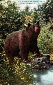 Brown Bear One Of The First Settlers Of The White Mountains