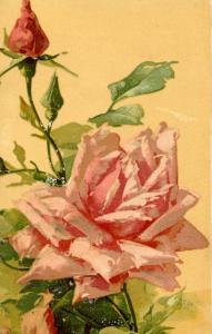 Roses      Artist: Catherine Klein