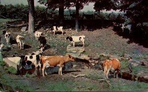 Oklahoma Bristow J & J Eat Shop Highwayy 66 Cattle Scene