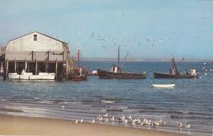 Sea Gulls and Boats at Town Wharf - Cape Cod, Massachusetts