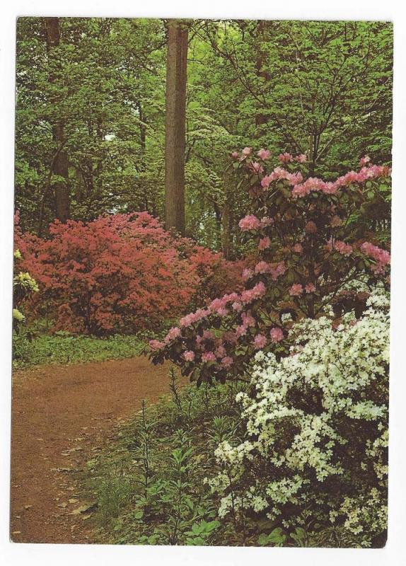 Winterthur Museum Garden Wilmington DE Azalea Woods Postcard