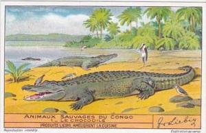 Liebig Trade Card S1349 Animals Of The Congo No 1 Crocodile