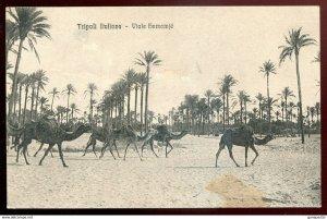 dc1200 - LIBYA Tripoli 1910s Italy Colonies. Viale Hamamje. Camels