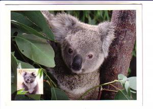 Baby Koala, Prepaid Postal Stationery, Australia, Australian Koala Foundation