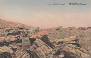 ADAMANA, Arizona, 1920-30s; In the Petrified Forest # 5
