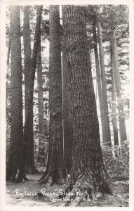 C93/ Grayling Michigan Mi Real Photo RPPC Postcard 1953 Hartwick Pines Park