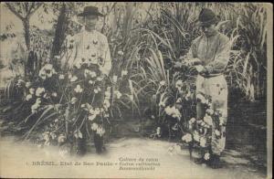 brazil, SÃO PAULO, Cotton Cultivation (1920s)
