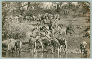 Elim Hospital Limpopo ZA Game Reserve Zebras 100 Miles Away~RPPC 1942 in French