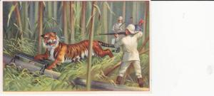 TC: White Hunter Aiming Rifle at Tiger Caught in Snare in Jungle 1880-90s