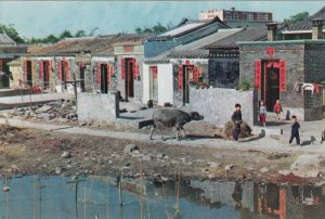 Hong Kong , China, 80-90s ; New Territories - Farming village
