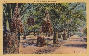 A Date Grove On The Desert Los Angeles California Curteiclh