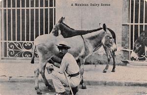 Mexico Postcard Tarjeta Postal Mexican Dairy Scene