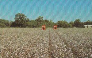 Mechanical Cotton Picker At Work