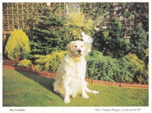 Lordswood Dog This Is My Home Garden Hampshire Womens Institute Postcard