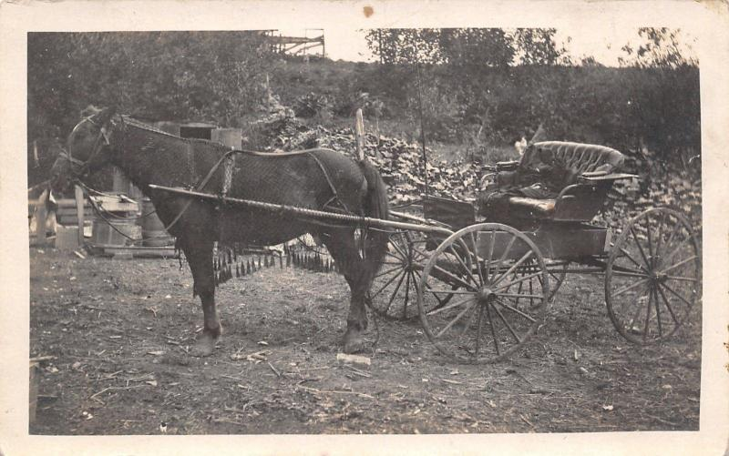 Horse~Fringed Net Over Body~Hitched To Empty Carriage~Leather Seat~1908 RPPC