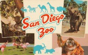 SAN DIEGO , California , 1940-60s ;  Zoo