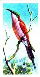 Brooke Bond Trade Card Tropical Birds No 17 Southern Carmine Bee-Eater