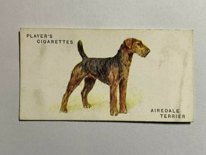 CIGARETTE CARD - PLAYERS DOGS #38 AIREDALE TERRIER    (UU259)