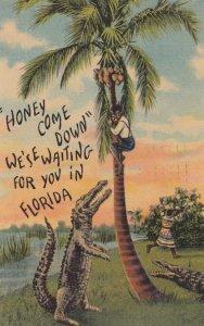Alligator trees a man , Florida , 1953