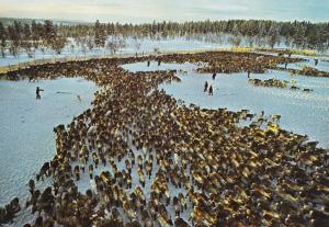 Norway Fargernas Land Resnkijning Postcard