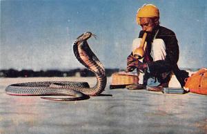 India Snake Charmer  Snake Charmer