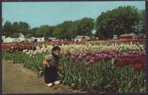 Nelis Tulip Farms,Holland,MI Postcard