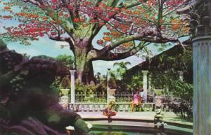 Florida Clearwater The Kapok Tree Inn 1981