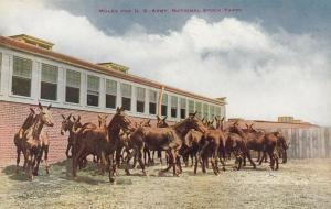 CHICAGO, Illinois, 1900-1910s; Mules for U.S. Army National Stock Yards