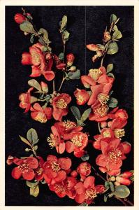 Japonica, Japanese camellia, red flowers
