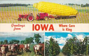 Exageration Large Corn Greetings From Iowa Where Corn Is King 1974