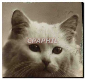 Postcard Old Cat