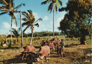 GUADELOUPE - Sugar Cane cart , 50-70s