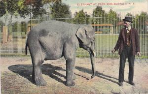 Elephant at Park Zoo, Buffalo, New York, PU-1901