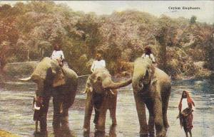 Elephants Ceylon Elephants Bathing