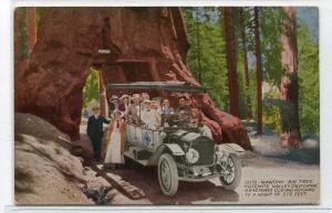 Touring Car Tree Tunnel Big Tree Yosemite Valley California 1910c postcard