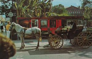 Louisiana New Orleans French Quarter Sightseeing Carriage 1972
