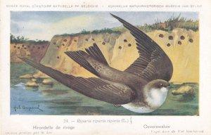 Sand Martin Riparia Riparia Bird Antique Rare Postcard